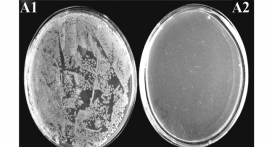 Fig. 5. The complete eradication of the Salmonella DT104 colony after only 10 minutes of exposure to red light
